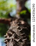 beautiful tree with spikes all... | Shutterstock . vector #1224356290