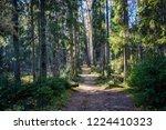 forest path landscape. deep...   Shutterstock . vector #1224410323