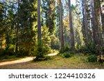autumn forest trees sunlight...   Shutterstock . vector #1224410326