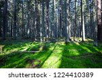 mossy forest sunlight trees... | Shutterstock . vector #1224410389