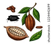 cocoa superfood drawing set.... | Shutterstock . vector #1224442699
