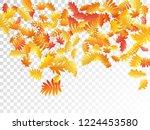 oak  maple  wild ash rowan... | Shutterstock .eps vector #1224453580