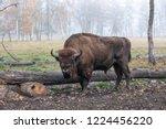 european bison in a forest... | Shutterstock . vector #1224456220