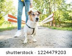 Stock photo girl is walking the dog on a leash in the city park legs in jeans the railing of the red bridge 1224479203