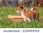 portrait picture of a cute elo... | Shutterstock . vector #1224495529
