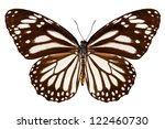 Stock photo butterfly species danaus melanippus white tiger in high definition extreme focus isolated on 122460730