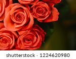natural roses delicate red with ...   Shutterstock . vector #1224620980