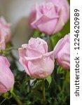 natural roses delicate violet...   Shutterstock . vector #1224620989