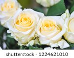 natural roses delicate yellow...   Shutterstock . vector #1224621010