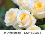 natural roses delicate yellow...   Shutterstock . vector #1224621016