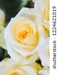 natural roses delicate yellow... | Shutterstock . vector #1224621019