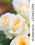 natural roses delicate yellow...   Shutterstock . vector #1224621046