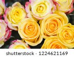 natural roses delicate yellow...   Shutterstock . vector #1224621169