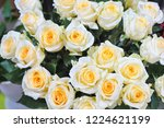 natural roses delicate yellow...   Shutterstock . vector #1224621199