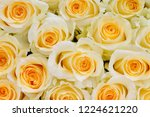 natural roses delicate yellow...   Shutterstock . vector #1224621220