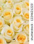 natural roses delicate yellow...   Shutterstock . vector #1224621223