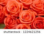 natural roses delicate red with ...   Shutterstock . vector #1224621256