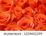 natural roses delicate red with ...   Shutterstock . vector #1224621259