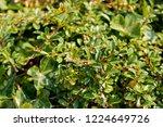 green vibrant background of... | Shutterstock . vector #1224649726