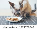 close up of a tabby cat eating... | Shutterstock . vector #1224703066