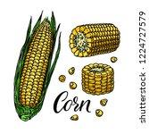 cute set of ripe corn. hand...   Shutterstock .eps vector #1224727579