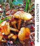 shaggy scalycap fungi  pholiota ...   Shutterstock . vector #1224761779
