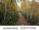 mountain birch trail | Shutterstock . vector #1224777436