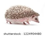 african pygmy hedgehog isolated ...   Shutterstock . vector #1224904480