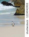 Single Regal Penguin At...