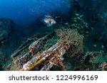 a predatory lionfish patrolling ... | Shutterstock . vector #1224996169