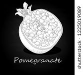 pomegranate hand drown vector... | Shutterstock .eps vector #1225019089