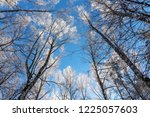 winter background. you can see... | Shutterstock . vector #1225057603