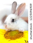 little rabbit and sunflower at... | Shutterstock . vector #1225096909