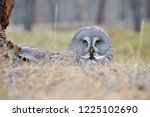 the bearded tawny length of the ... | Shutterstock . vector #1225102690