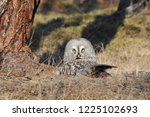 the bearded tawny length of the ... | Shutterstock . vector #1225102693