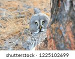 the bearded tawny length of the ... | Shutterstock . vector #1225102699
