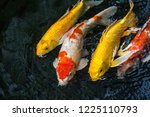 fancy carp swimming in a pond.... | Shutterstock . vector #1225110793