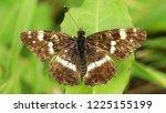 black butterfly on leaf   Shutterstock . vector #1225155199