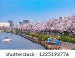 asakusa sumida park cherry...   Shutterstock . vector #1225193776