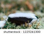 pre winter season. the first... | Shutterstock . vector #1225261300