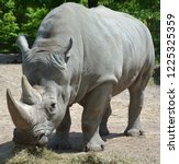 at zoo a white rhinoceros or... | Shutterstock . vector #1225325359