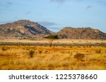 solitary tree landscape in...   Shutterstock . vector #1225378660
