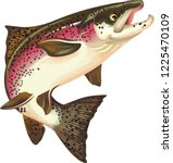 salmon fish illustration   Shutterstock . vector #1225470109