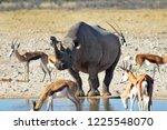 Impalas And Rhino On Watering...