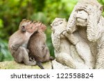 Long Tailed Macaques  Macaca...