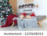 golden retriever dog wearing in ... | Shutterstock . vector #1225638313