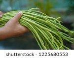 close up  fresh long beans... | Shutterstock . vector #1225680553