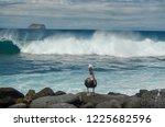 Brown Pelican On Rocks In Fron...