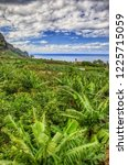 banana palms plantation in... | Shutterstock . vector #1225715059