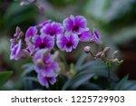 soft focus  close up beautiful... | Shutterstock . vector #1225729903